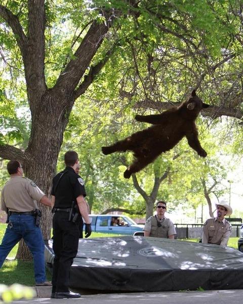 木から落ちるクマ