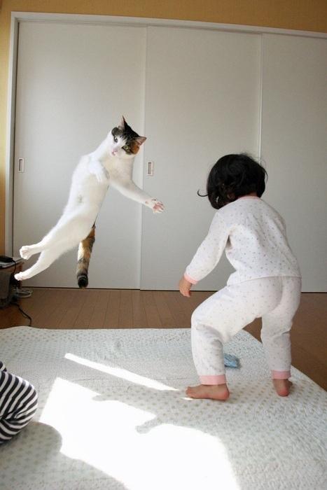 ネコが空中に漂う瞬間