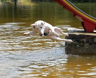 水面に落ちていくテリア犬