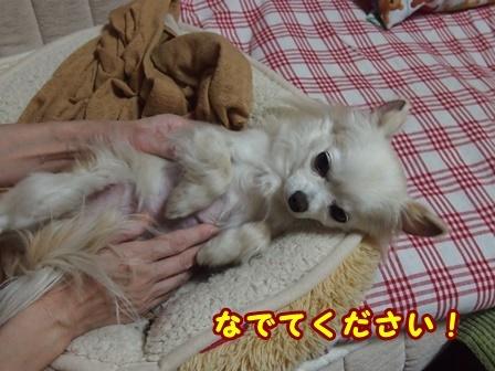 blog8986a.jpg