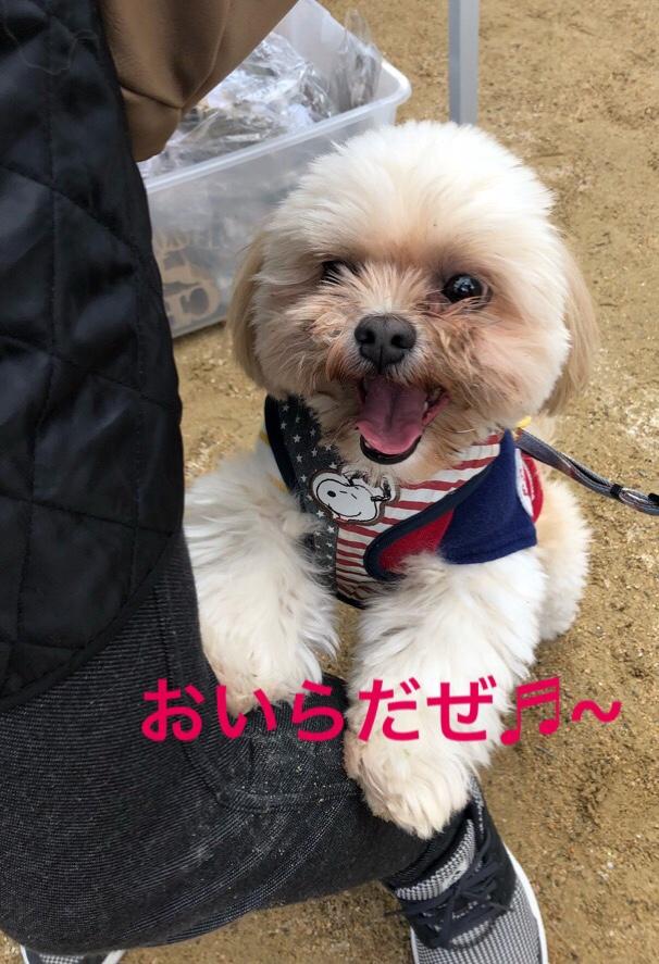 fc2blog_201810311956237f9.jpg