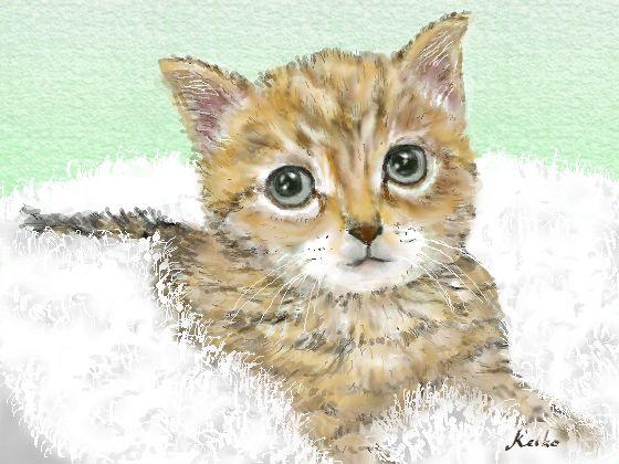 cat-b.jpg