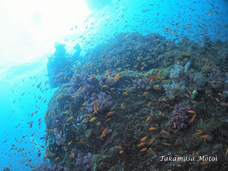 5白根サンゴ全体覆う (2)