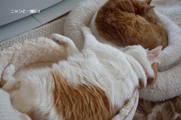 振り向き美猫⁉