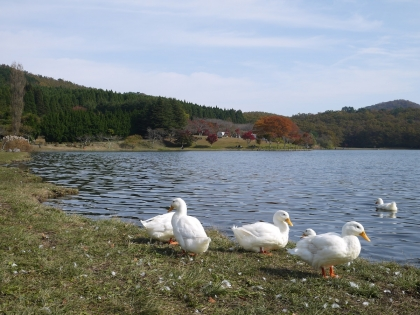 志高湖(2)
