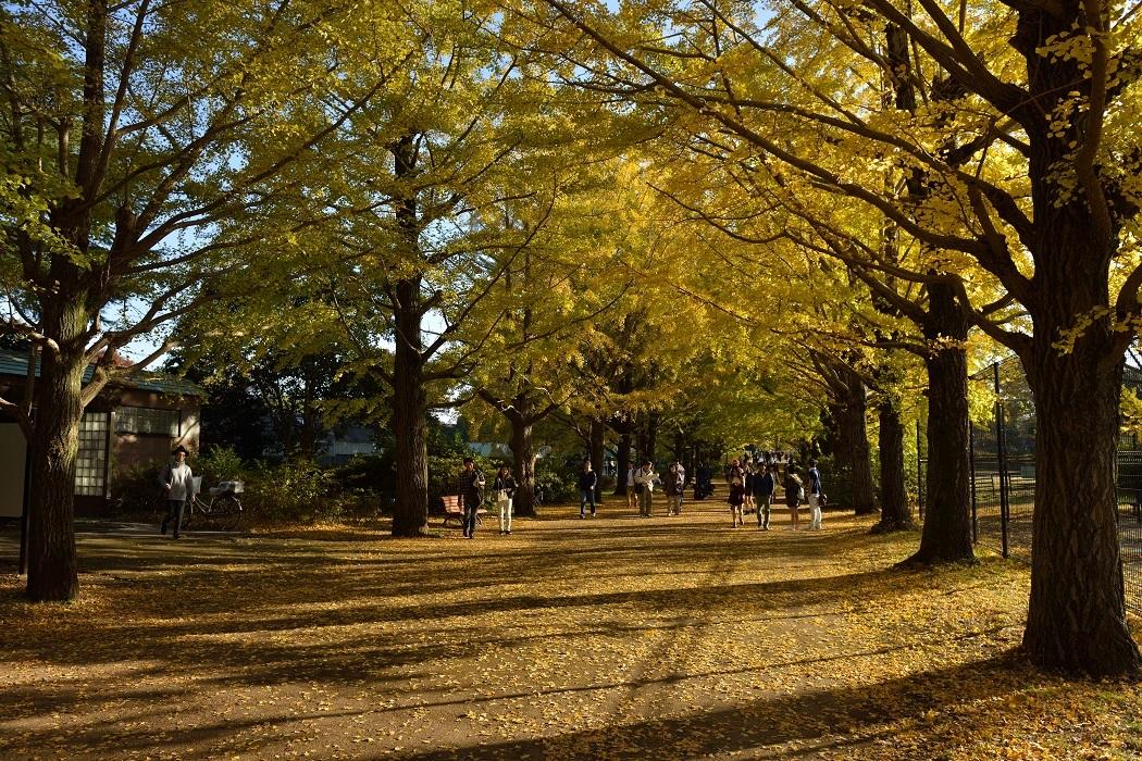 秋の昭和記念公園②