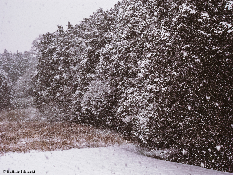 自宅裏山と降る雪