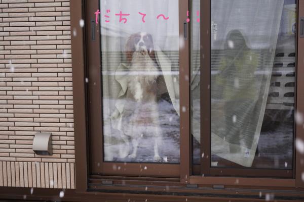DSC06909.jpg