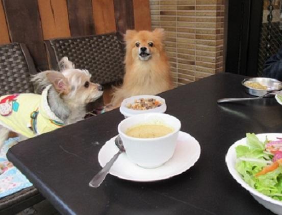 3B01S スープとサラダ 1229