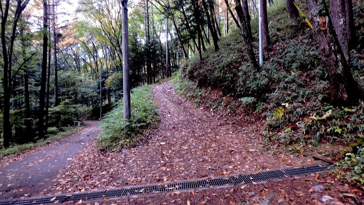 2016-11suwako002.jpg