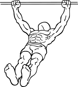 800px-Body-row-2.png