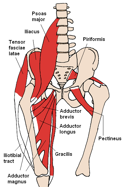 Anterior_Hip_Muscles_2_20161211204226671.png