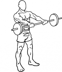 Barbell-front-raises-1.png