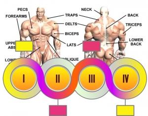 Body_muscles_201612202001591d1.jpg