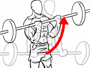 Close_grip_standing_bicep_curls_with_barbell_2.png