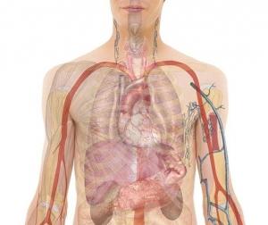 anatomy-254129_960_720-crop.jpg