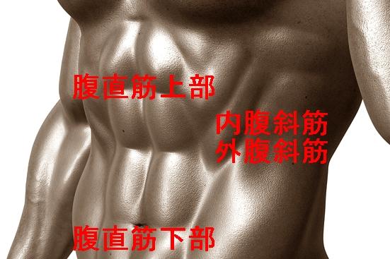 bodybuilder-331670_960_720-crop.jpg