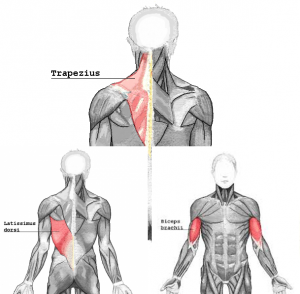 pullmuscle_20161121191126805.png