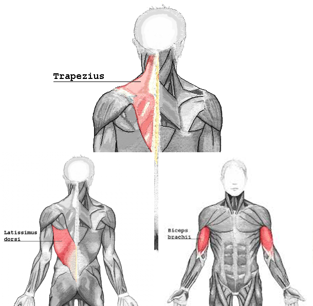 pullmuscle_20161127182418158.png