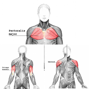 pushmuscle_20161127182622ced.png