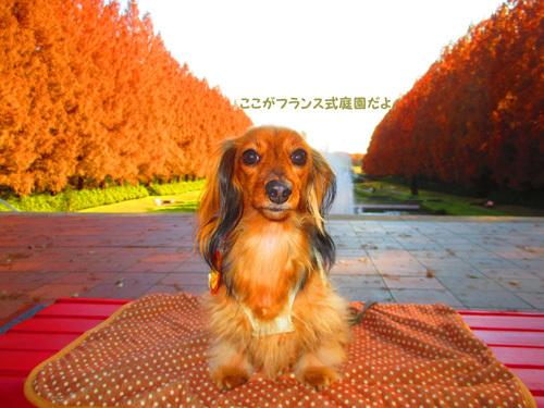 2016-12sagamihara25.jpg