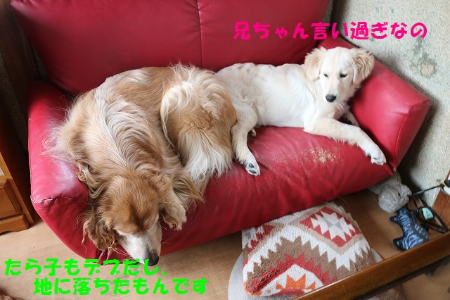 IMG_1578_20161230125732479.jpg
