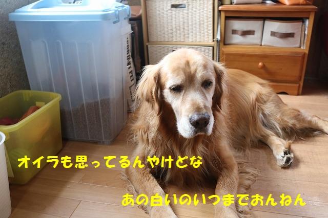 IMG_1580_20161230125735b07.jpg