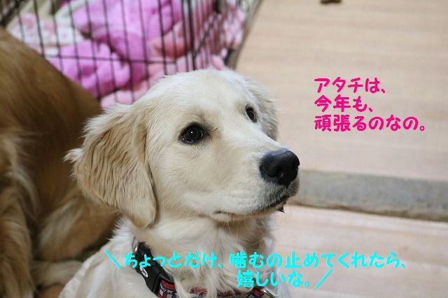 IMG_1604_20161231220944e7d.jpg