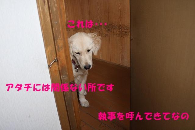 IMG_2687.jpg