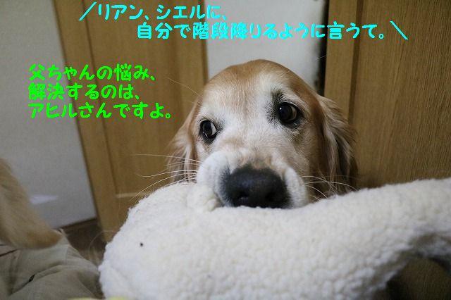 IMG_2852_20170120001215e20.jpg