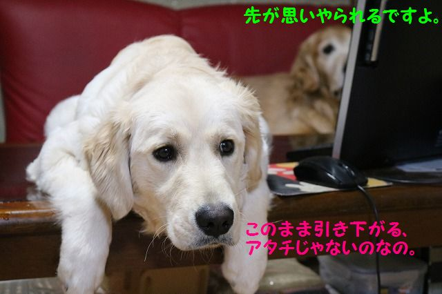 IMG_3457_20170124231557edc.jpg