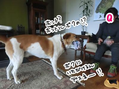 08012017_dog3.jpg