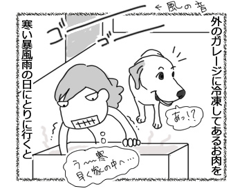 08122016_dog1.jpg