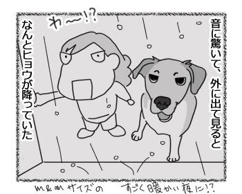 12122016_dog2.jpg