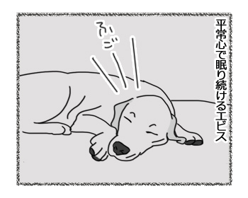 12122016_dog5mini.jpg