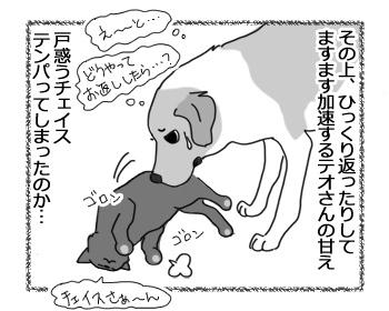 羊の国のラブラドール絵日記シニア!!「猫語は難しいデース」2