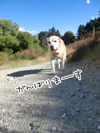 15012017_dog1.jpg