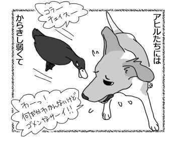 羊の国のラブラドール絵日記シニア!!「○○に厳しいチェイス」3