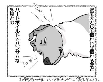 羊の国のラブラドール絵日記シニア!!「チェイスの魅力」3