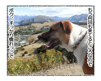 24012017_dog2.jpg