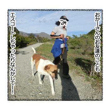 24012017_dog4.jpg