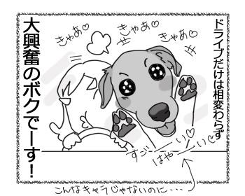 24012017_dog6.jpg