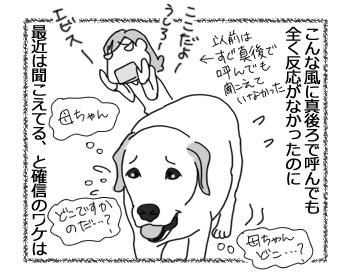 24112016_dog1mini.jpg