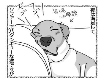 26012017_dog2.jpg
