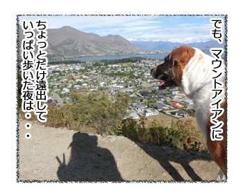 26012017_dog3.jpg
