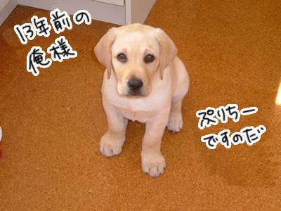 27012017_dog4.jpg