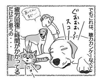 羊の国のラブラドール絵日記シニア!!「ふぁいとー!いっぱぁつ!」4