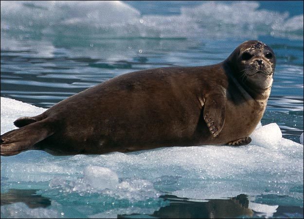 seal-picture.jpg