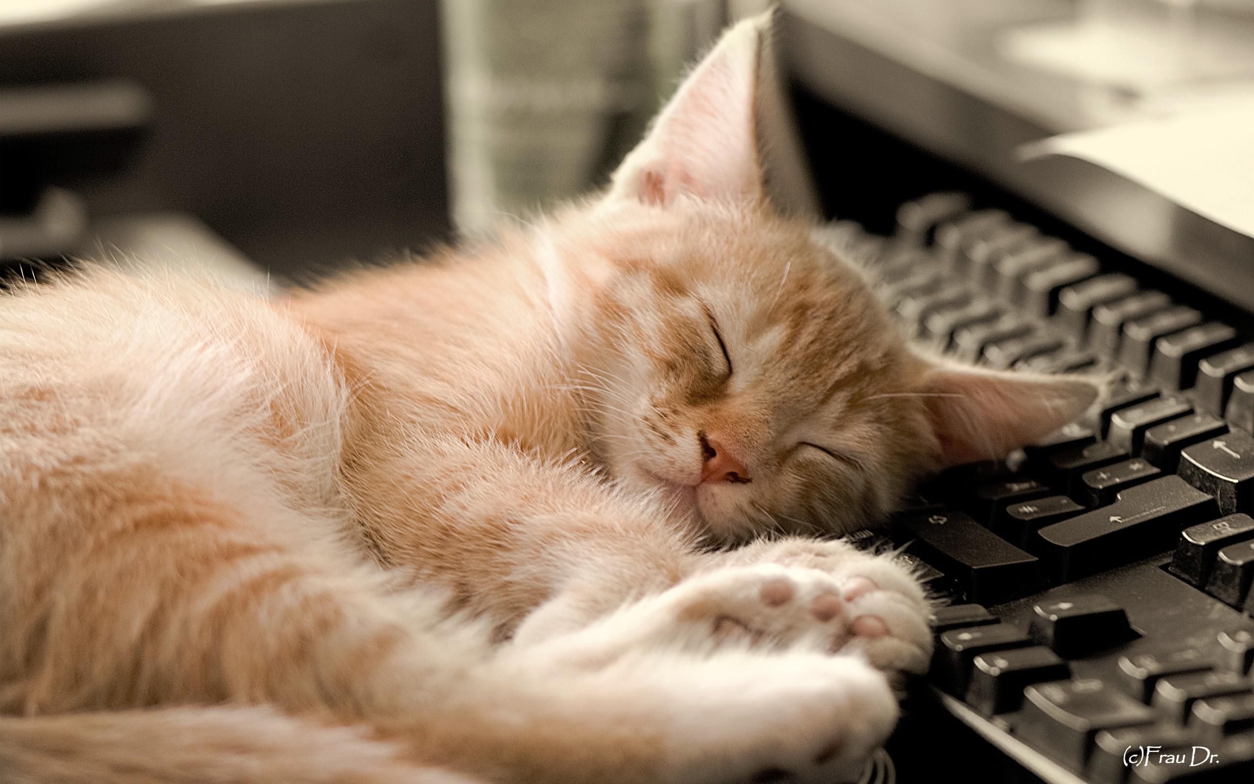 sleeping-cat-wallpaper-hd-1.jpg