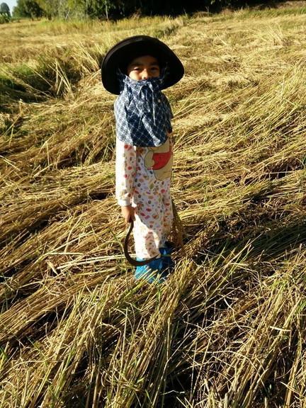 チャイヤプーム県の農村にて (1)